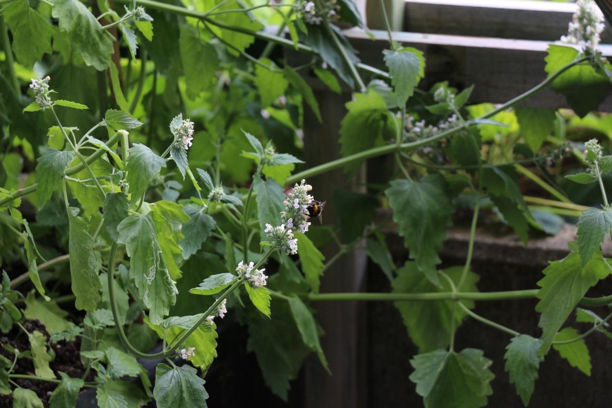 mit pflanzen zecken vertreiben pflanzen wissen. Black Bedroom Furniture Sets. Home Design Ideas