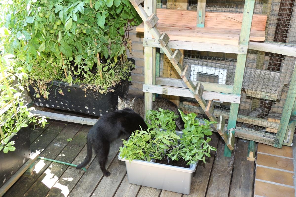 katzenpflanzen f r den eigenen garten pflanzen wissen. Black Bedroom Furniture Sets. Home Design Ideas