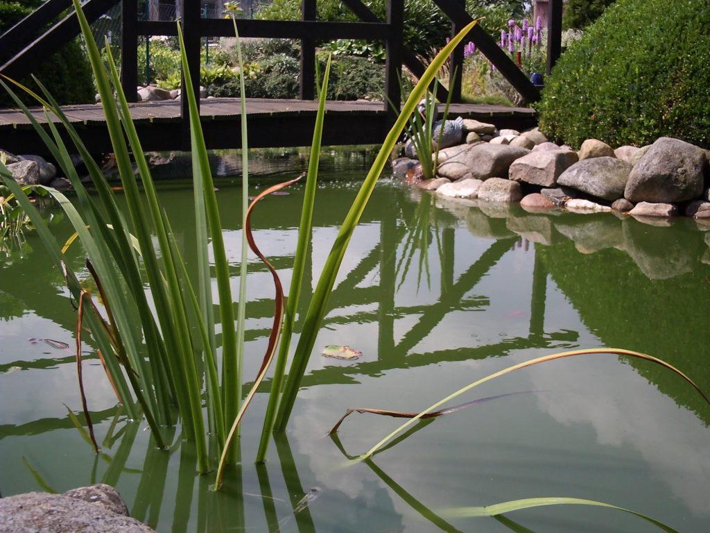Der Gartenteich bietet Idylle und einen Lebensraum für viele Kleinlebewesen